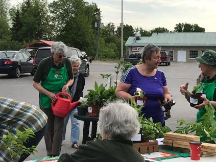 plant sale 2018 2 Virginia watering