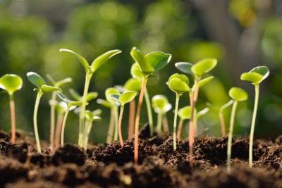 seedlings-1-400x267